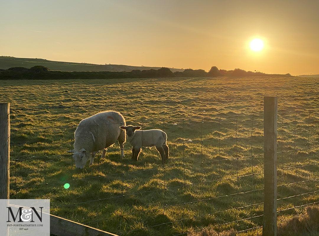Mum sheep and lamb