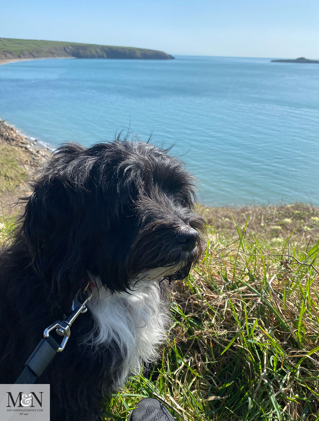 Lily resting on the costal path
