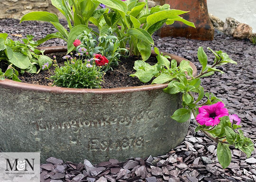 Beautiful pot with Hosta and Petunias