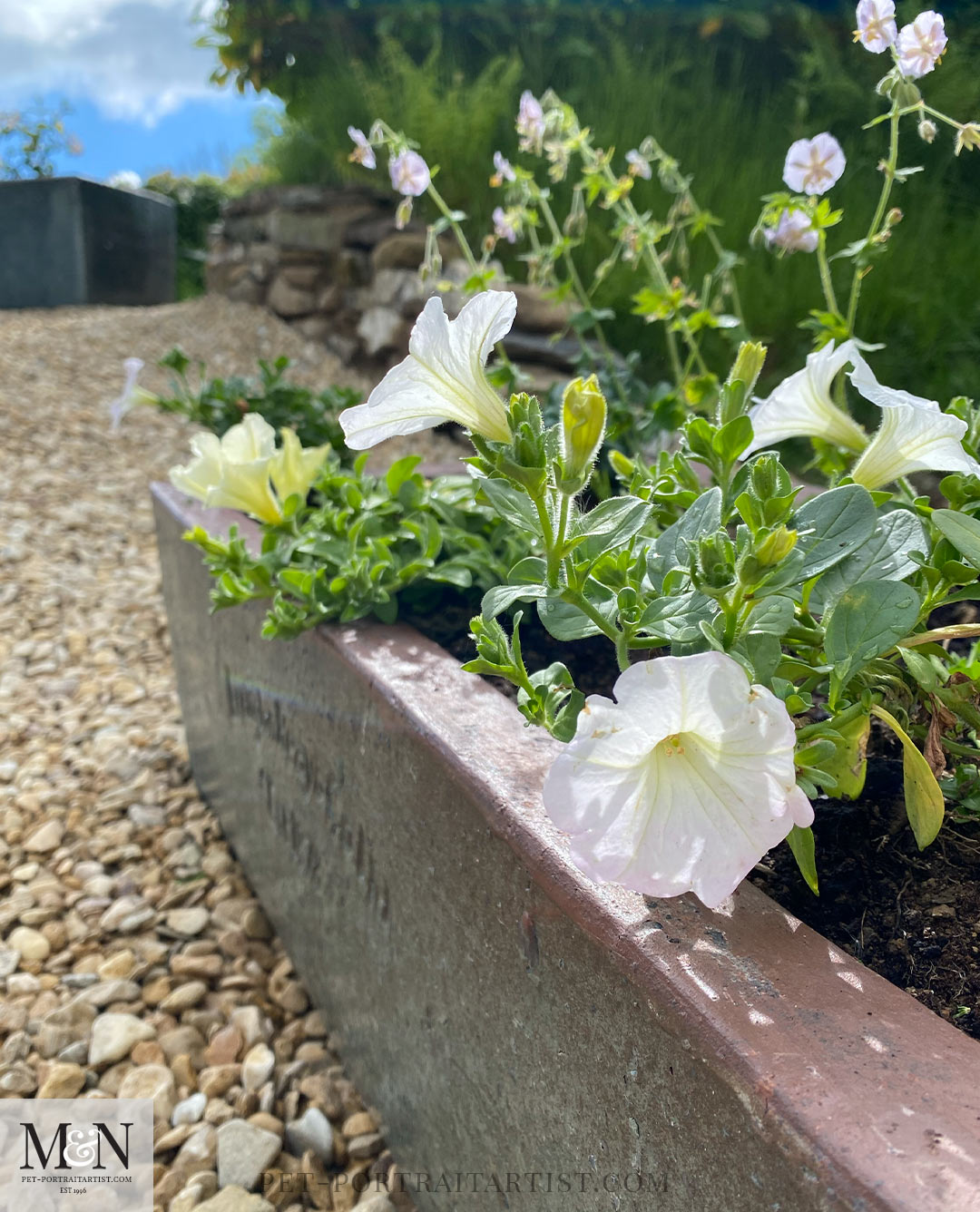 Melanie's May Monthly News - petunias