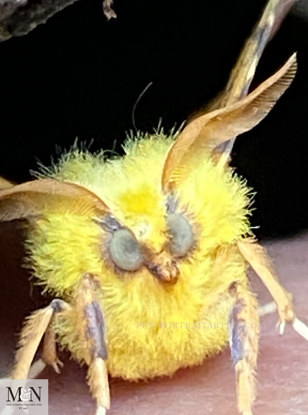 Melanie's August Monthly News Funny moth