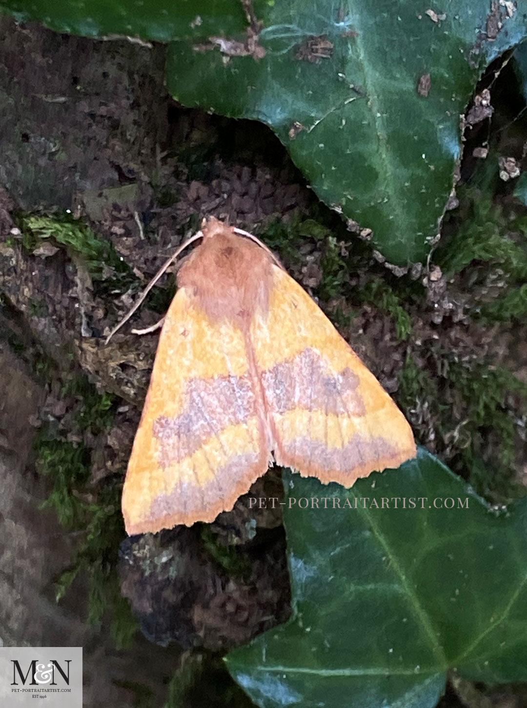 Melanie's August Monthly News moth
