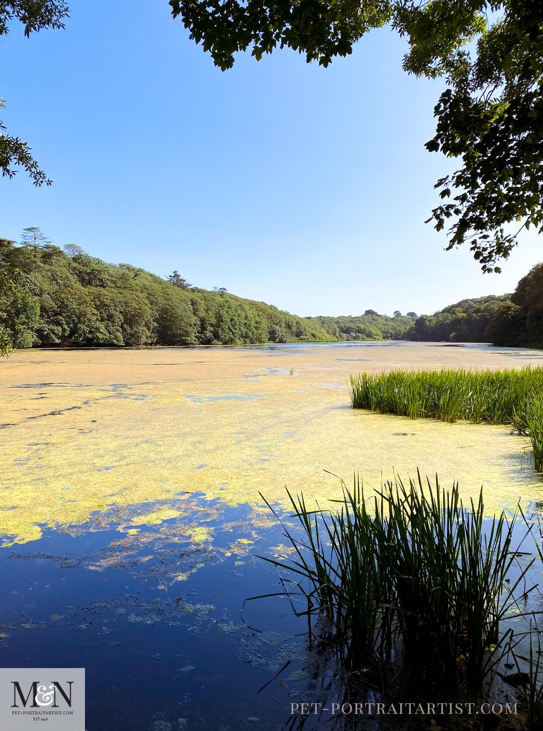 Bosherton Ponds
