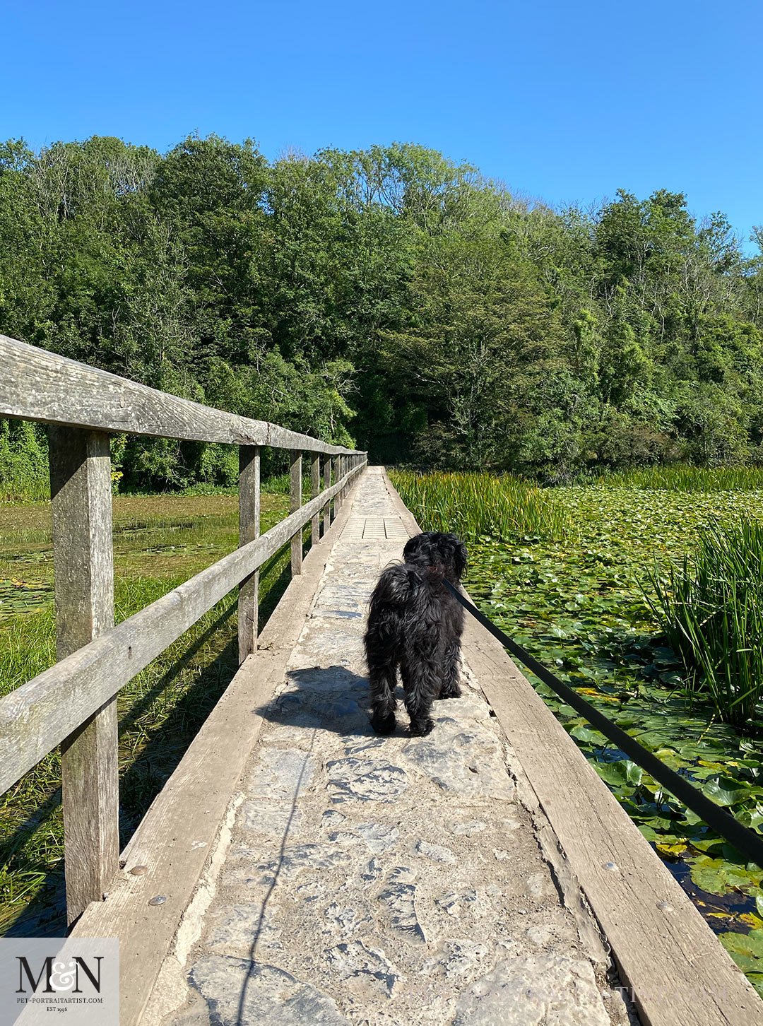 Melanie's August Monthly News - Lily and the lily ponds